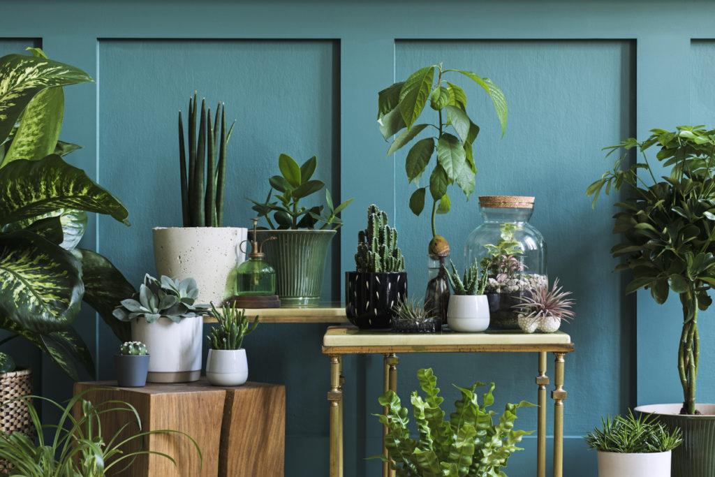 How to create an indoor jungle Shark vacuums |  Stylish living room interior filled a lot of beautiful plants in different design pots. Composition of home garden jungle.