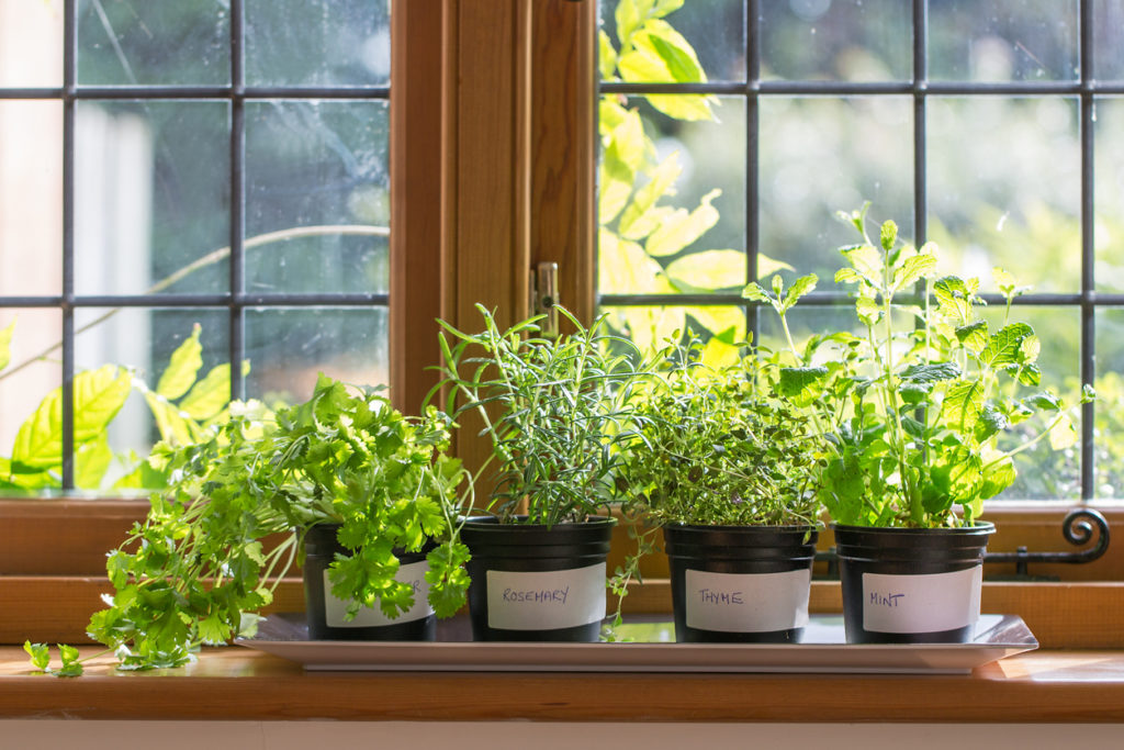 How to grow your own food at home | Herbs growing on a windowsill | Shark vacuums